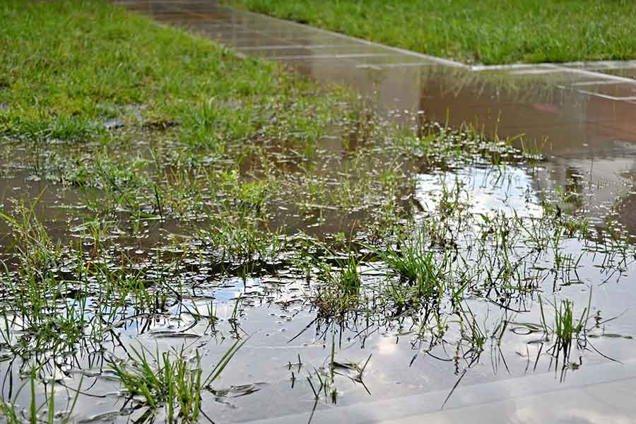 Drainage Solutions for Waterlogged Gardens